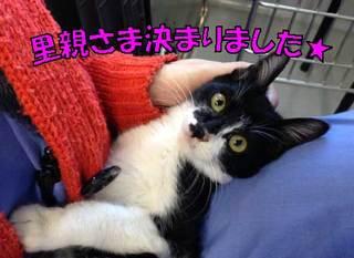 田端 子猫2.jpg
